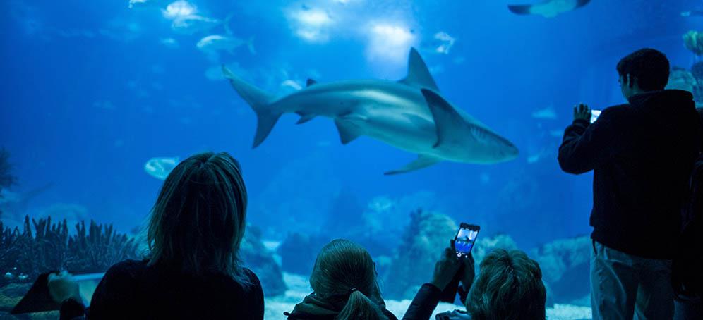 aquarium-lisabon