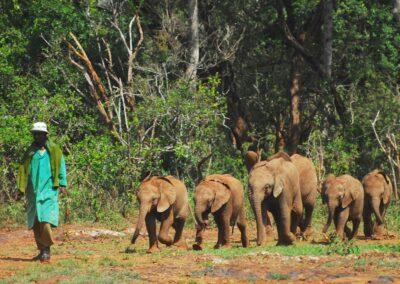 sloni-safari