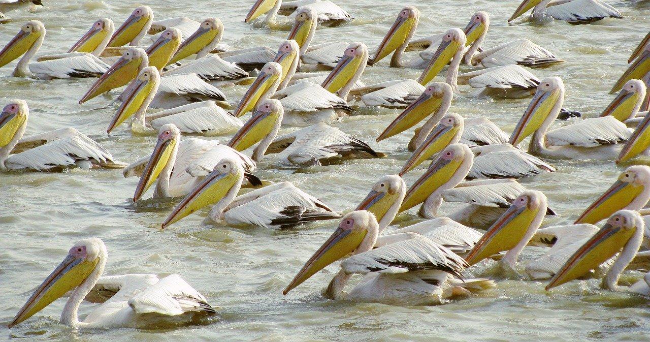 ptaci-senegal